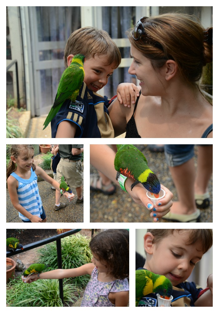 fun kid activities at busch gardens